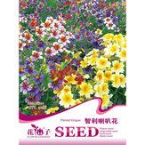 30 PCS Chile Salpiglossis Sinuate Seed Morning Glory Seeds