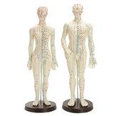 Original Modelo de la acupuntura del cuerpo humano Male Female Meridians Model Chart Base 48 / 50cm del libro
